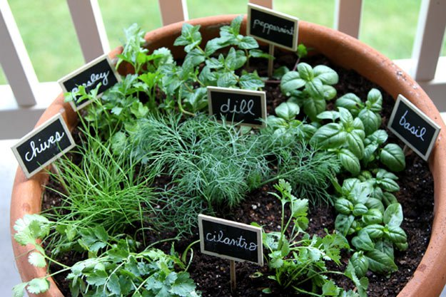 ideas for your indoor herb garden, Beautiful flower