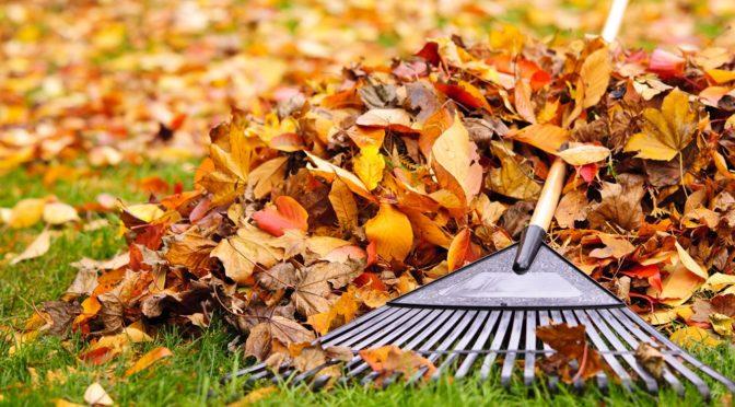 fall home landscape ideas